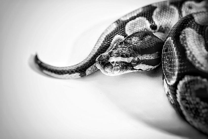Petite séance Black and White 00cc1310