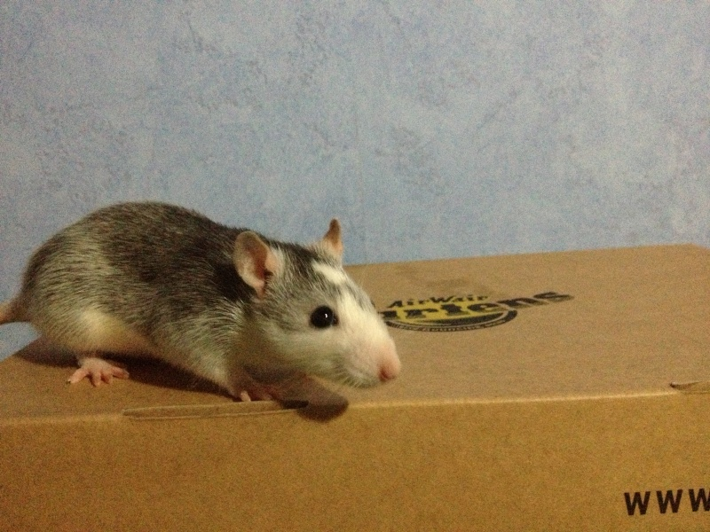 Les ratons de Niort ! Image17