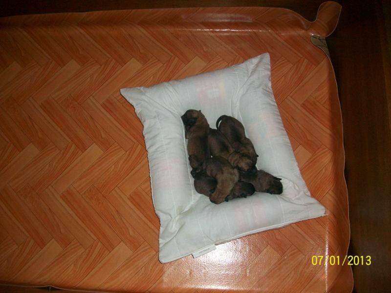 Ma chienne en gestation a des pertes gluante rouge un peu rose - Page 2 Pictur33