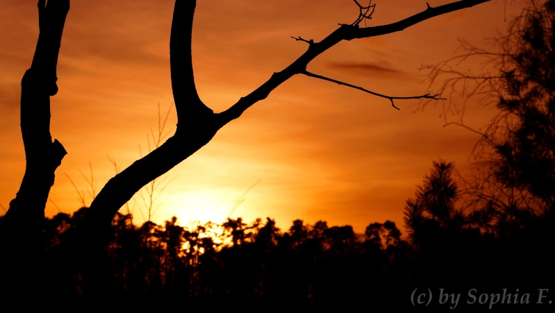 Sonnenuntergang Dsc00511