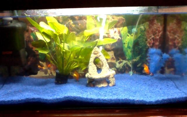qui pourait m'aider a redecorer mon aquarium  Image012