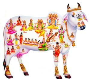 Kamadhenu, la vache céleste 41024914