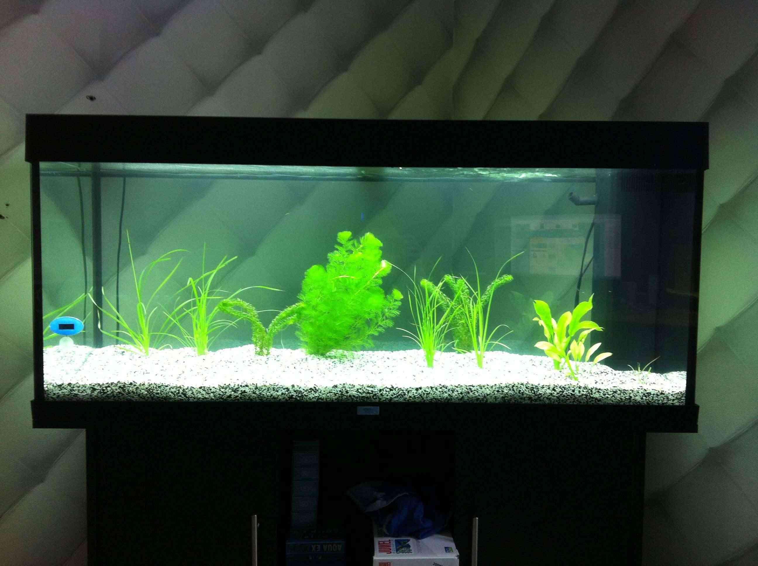 Voici mon aquarium Img_0611
