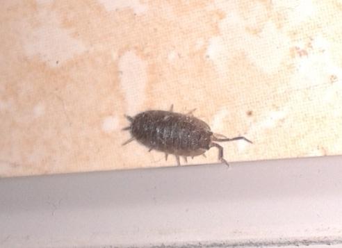 Identification d'un insecte 20130211