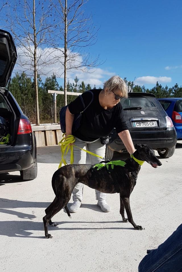 Sola née en 2010  Scooby France Adopté - Page 2 Sola_410