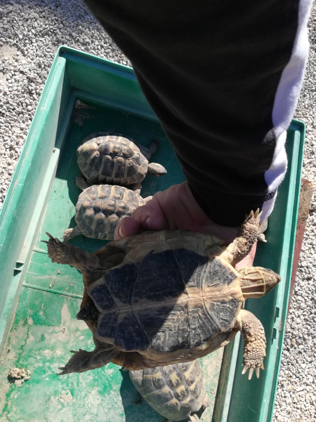 Nouvelle tortue  Img_2056