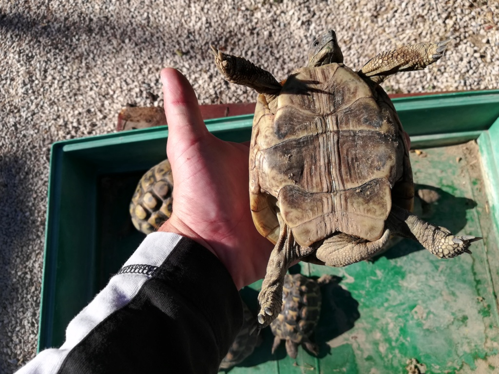Nouvelle tortue  Img_2057