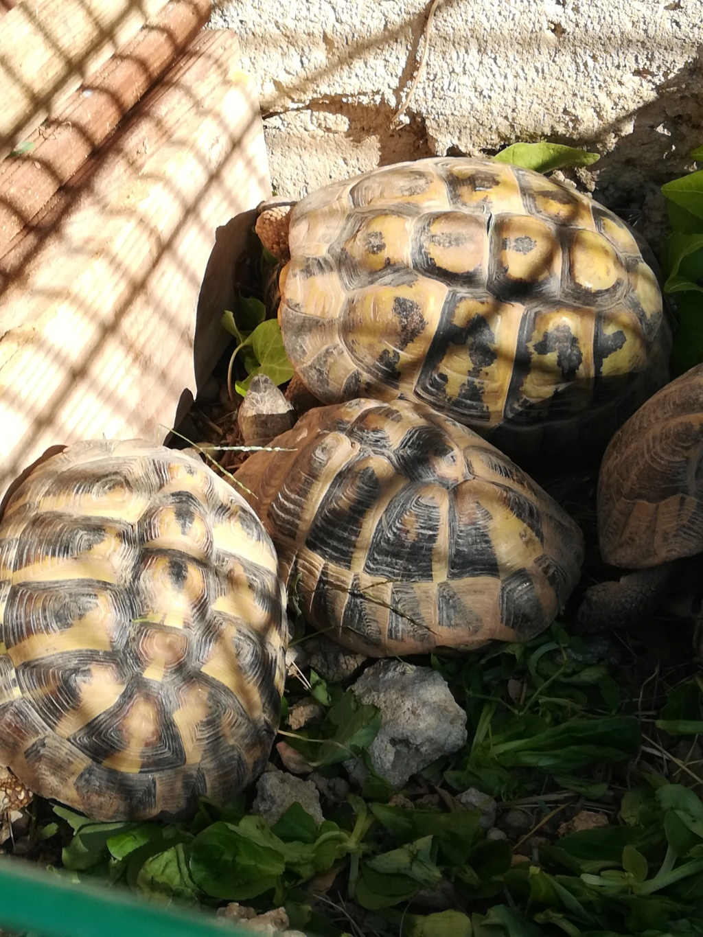 Nouvelle tortue  Img_2064