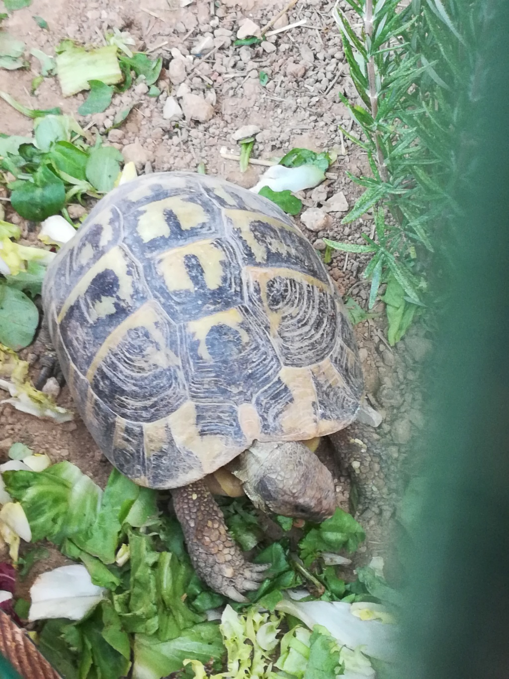 Nouvelle tortue  Img_2066