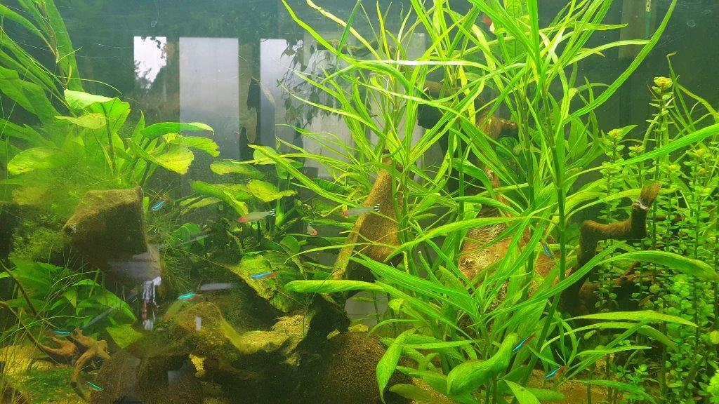 aquarium de 360 litres 110