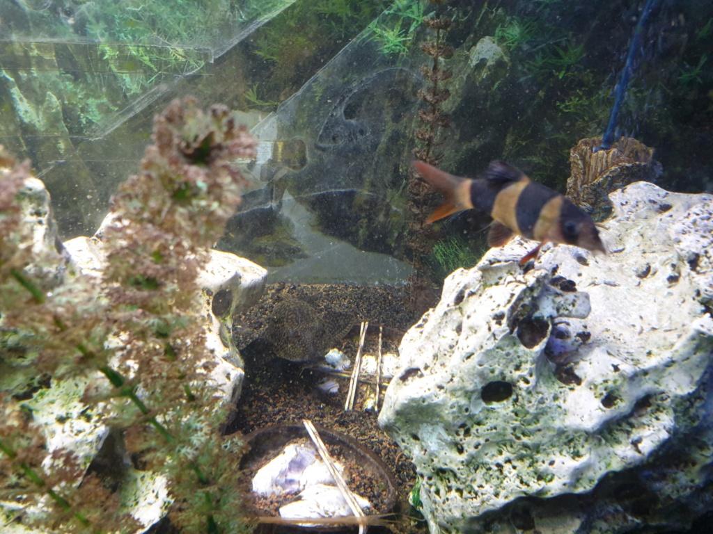 voici mon aquarium de 300 litres 20191112