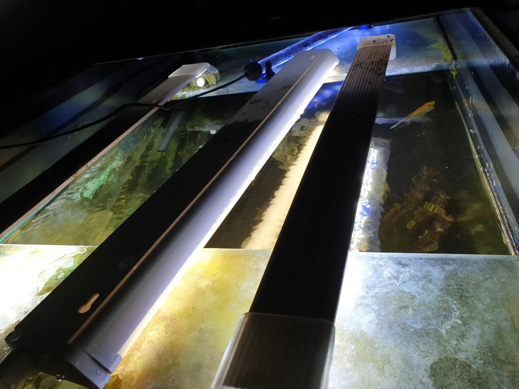 voici mon aquarium de 300 litres 20191114