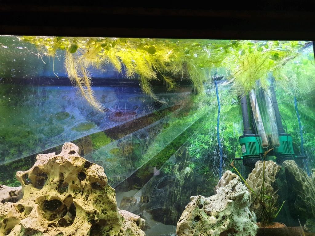 voici mon aquarium de 300 litres 20191130
