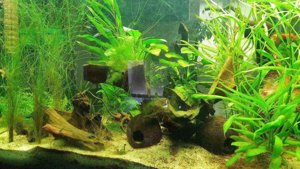 aquarium de 360 litres 210