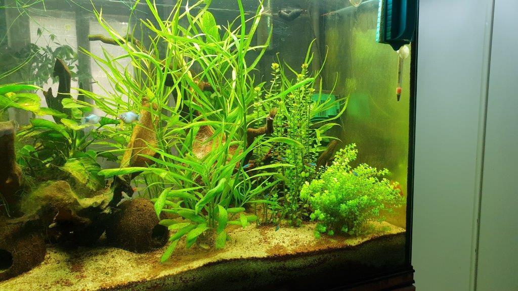 aquarium de 360 litres 410