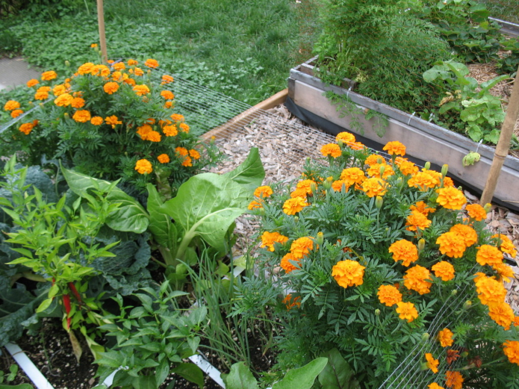 Marigold and other flower choices Img_2588