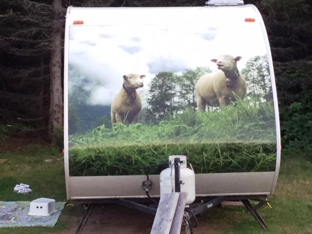 Une belle Mini ornée de moutons... Mouton11