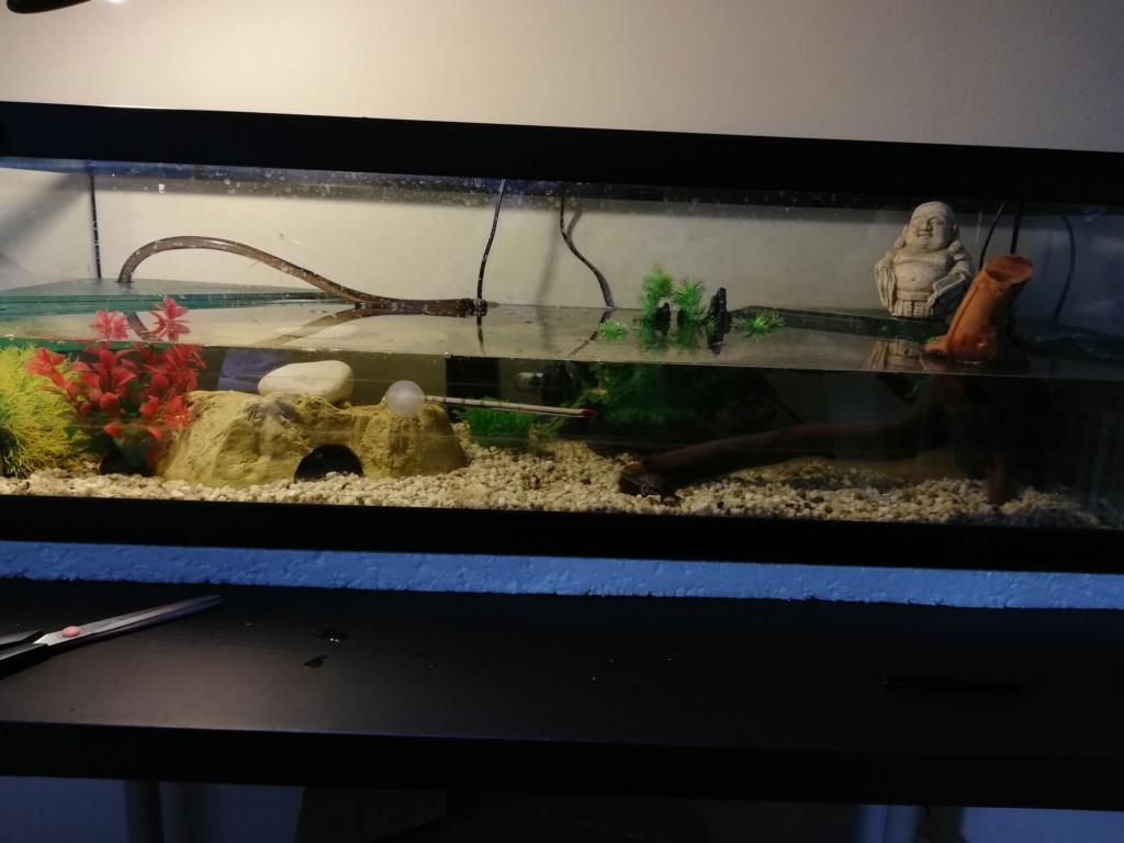 Aquarium Sternotherus Odoratus  Img_2013
