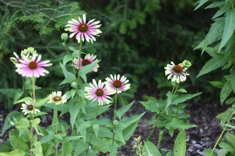 Les fleurs chez Pinco - Page 17 Img_5910