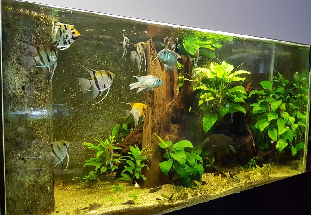 Mon 2ème aquarium 300 L planté  - Page 2 20190914