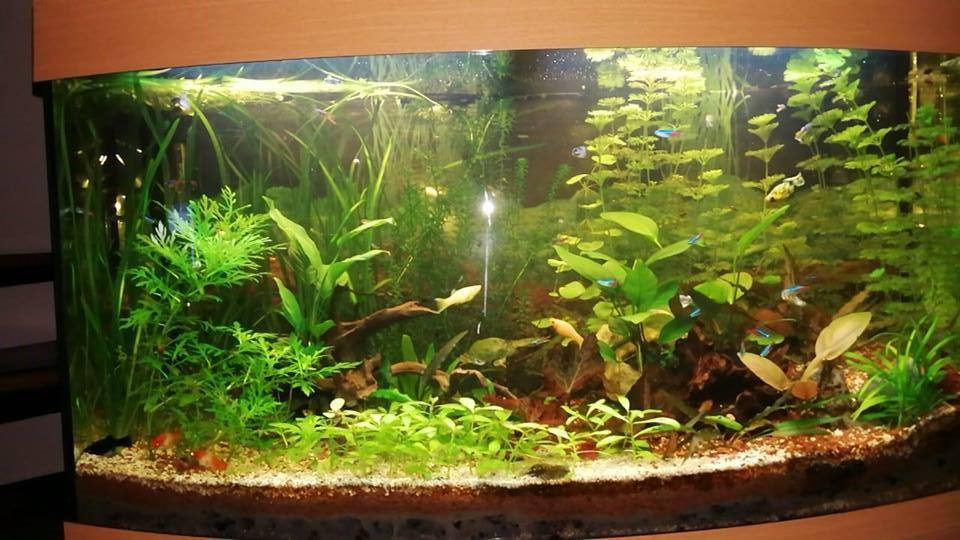 Présentation de mon Aquarium  40144010