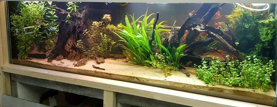 Remise en service aqquarium Bas_as10
