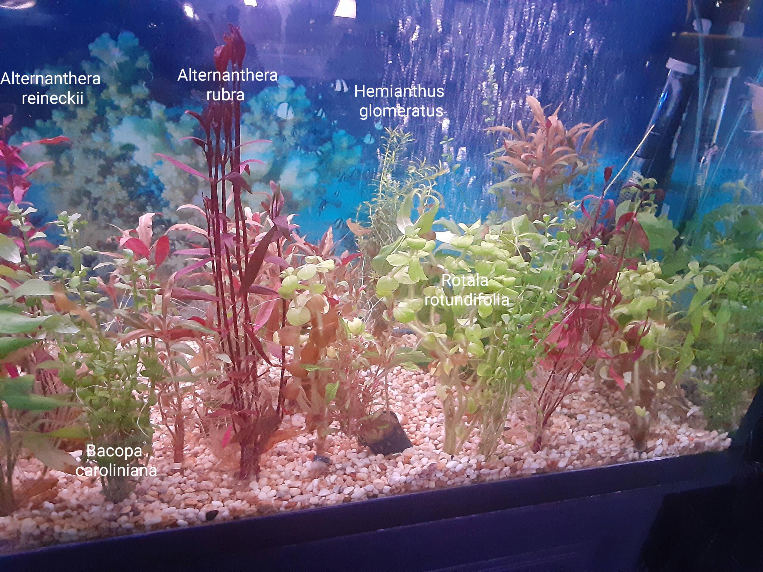 Identification de plantes Choix_10