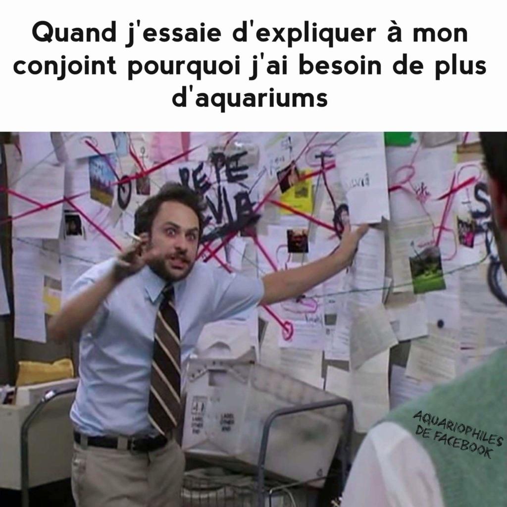 Aquarium dennerle 30L d'occasion :-) Fb_img11