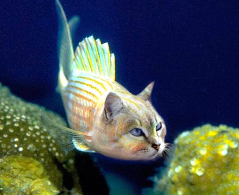 projet aquarium 200 litres Image_10