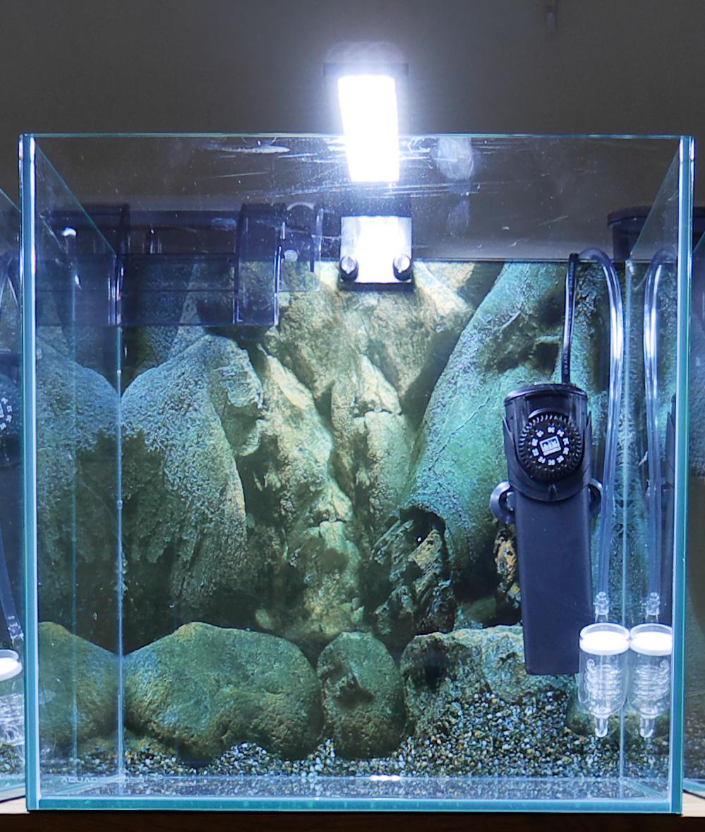 Aquascape asiatique P1000212