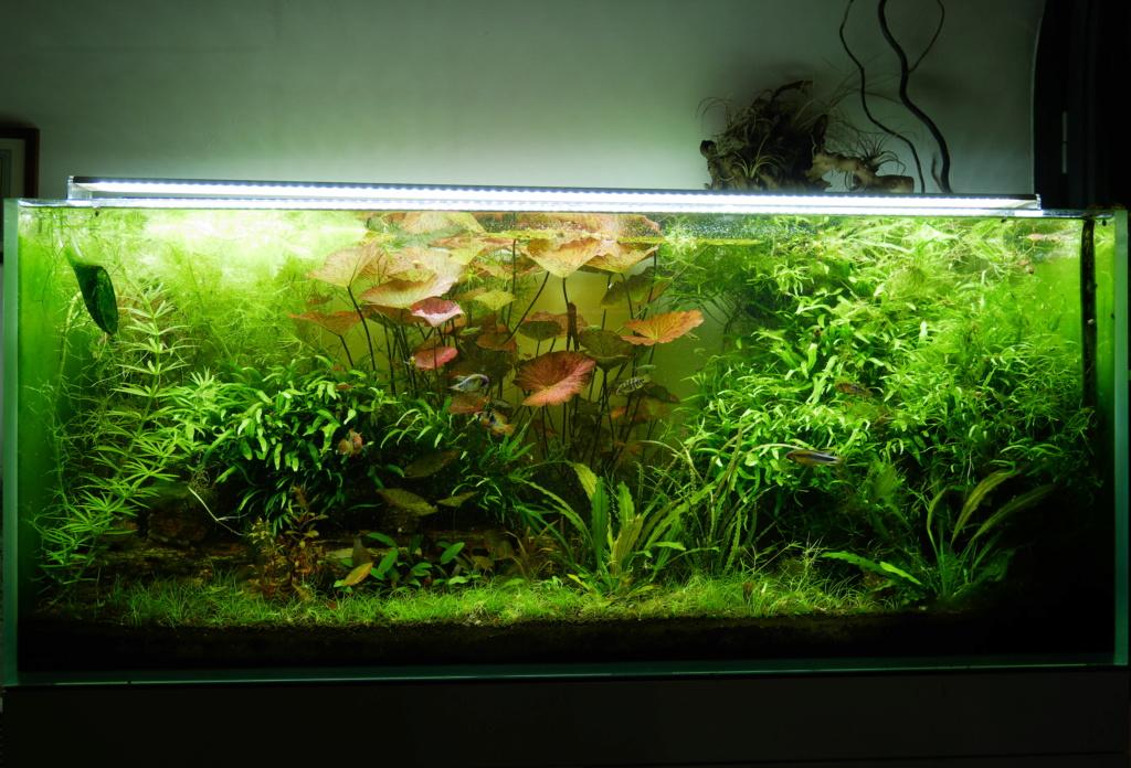 Mon nouveau projet : aquarium de 300 l.  - Page 2 P1010022