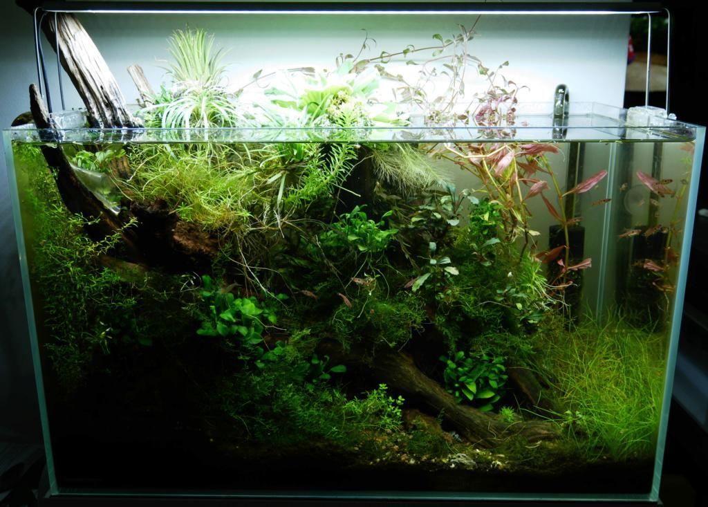 Nouvel aquarium - 120 litres P1010110