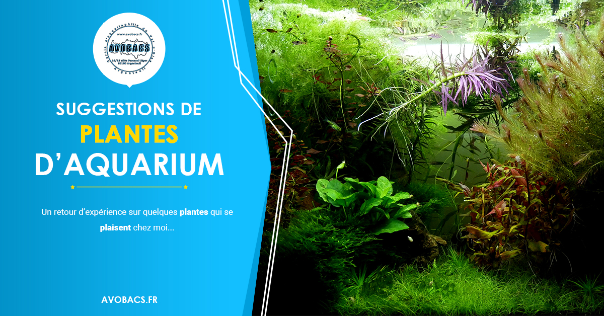 Quelques plantes d'aquarium d'eau douce plaisantes Sugges11