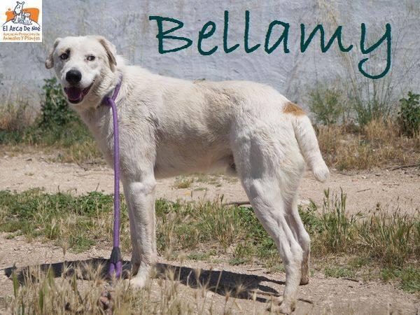 BELLAMY - ES (Sole) 36241810