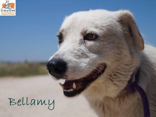 BELLAMY - ES (Sole) 36320610