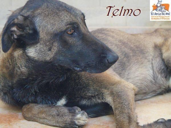 TELMO - CROISE MALINOIS - ES (Sole) 38526210