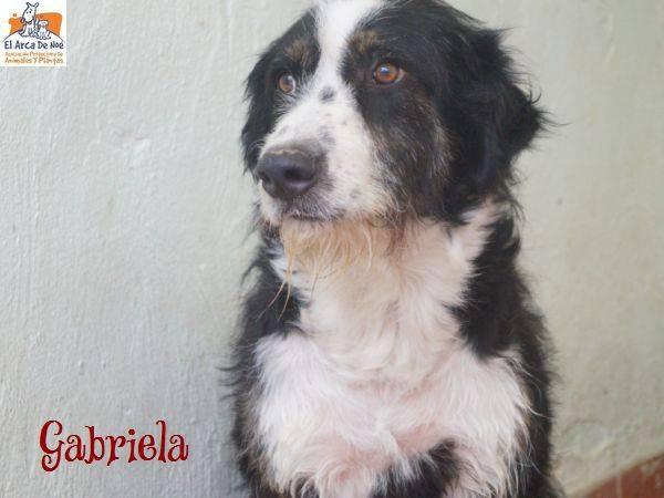 GABRIELA (devenue ELLA) - NOIRE & BLANCHE - ES (Sole) 39441610