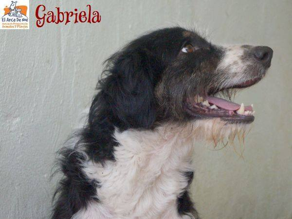GABRIELA (devenue ELLA) - NOIRE & BLANCHE - ES (Sole) 39568510