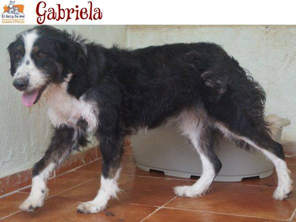 GABRIELA (devenue ELLA) - NOIRE & BLANCHE - ES (Sole) 39581310