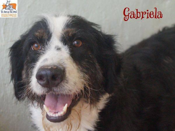 GABRIELA (devenue ELLA) - NOIRE & BLANCHE - ES (Sole) 39613610