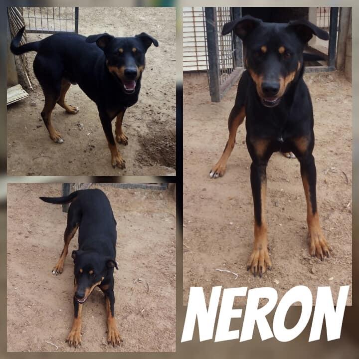 NERON - ES (Raquel) 39760610