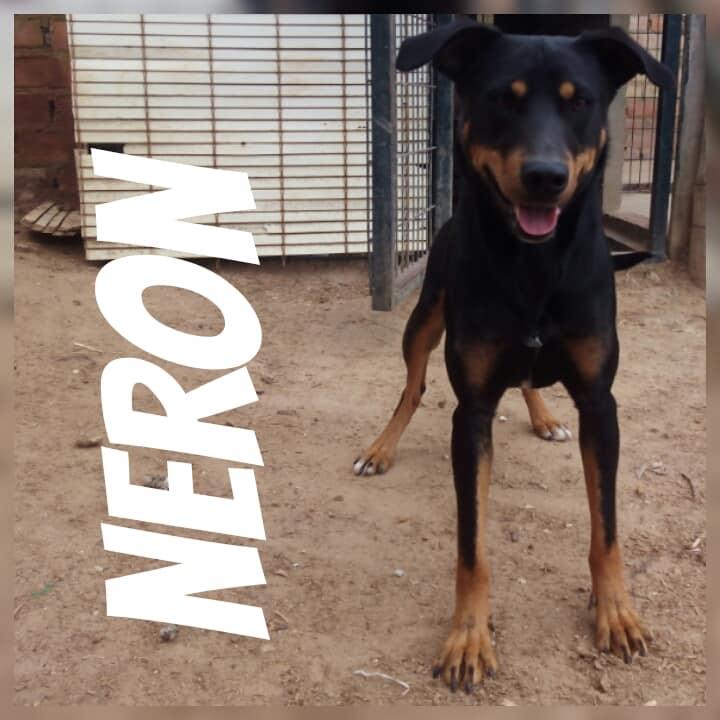 NERON - ES (Raquel) 39931610