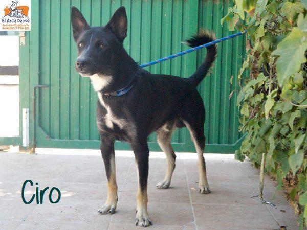 CIRO - TRICOLORE - ES (Sole)  40773610