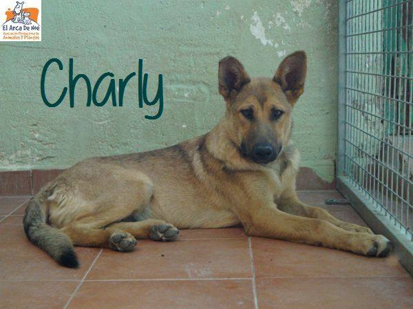 CHARLY - CROISE BERGER - ES (Sole) 40848410