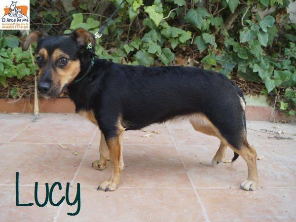 LUCY - NOIRE & FEU - ES (Sole)  40987110