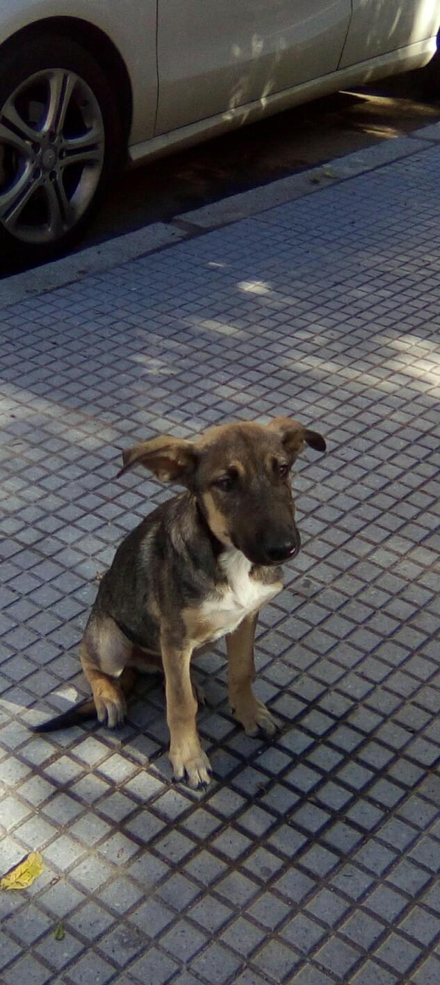 LEIKO - ES (Valverde) Img-2663
