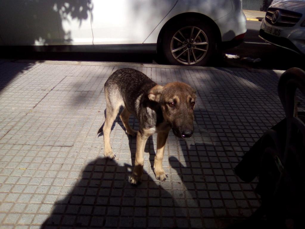 LEIKO - ES (Valverde) Img-2666