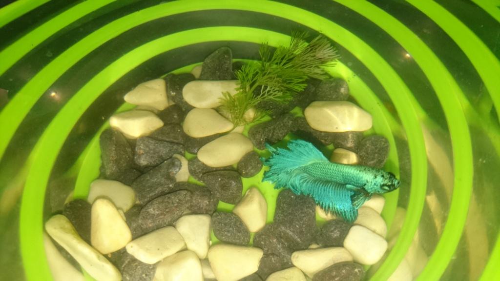 Comment cycle un bac rapidement avec un poisson ? - Page 2 Dsc_2423