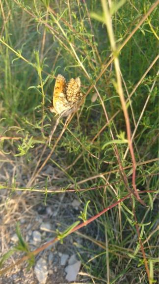 Ma passion de l'entomologie. - Page 2 Dsc_2530
