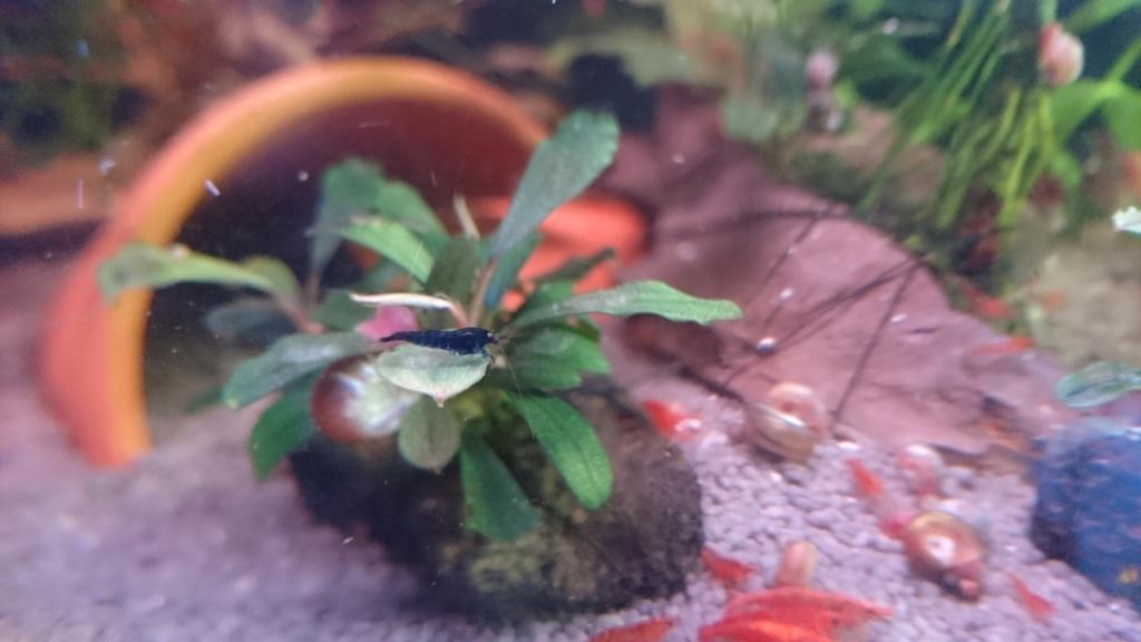 Mes Nouvelles locataire tiger blue de chez opty :D Dsc_2718